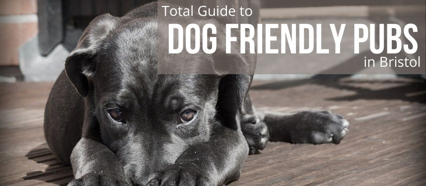 Dog Friendly Pubs in Bristol